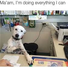 Hilarious Work Memes - trending current events dog dogs animal animals puppy