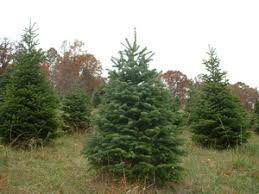 Christmas Tree Farm Va - roanoke area of virginia christmas tree farms choose and cut