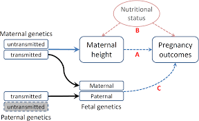 assessing the causal relationship of maternal height on birth size