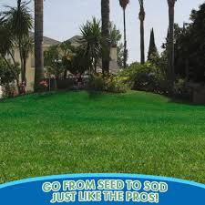 hydro mousse lawn grass seeds asseenontv com shop