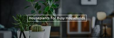 Best Low Light Indoor Plants by Low Light Indoor Plants That Are Easy To Grow The Best Maintenance