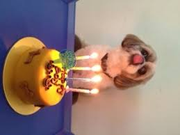 birthday cakes for dogssingapore pet taxi 24 hours vets