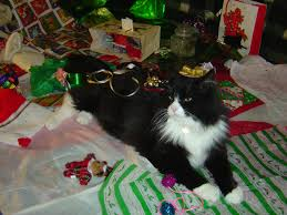 cat covered with christmas ribbons picture free photograph