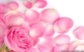 Rose Petals Pink Rose Petals Background Wallpapers13 Com