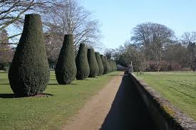 file ornamental trees at culford school geograph org uk 687632