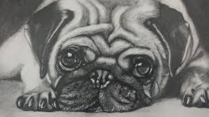 drawing a pug puppy dog realistic art youtube