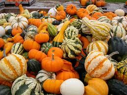 vegetables ornamental pumpkins and gourds curcubita sp