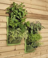 fancy home decor showing innovative salad indoor vertical garden