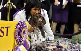 westminster bluetick coonhound 2016 judges for 2017 westminster kennel club show announced american