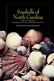 turning 20 seashells of north carolina coastwatch currents
