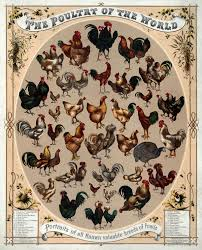words related to thanksgiving poultry wikipedia