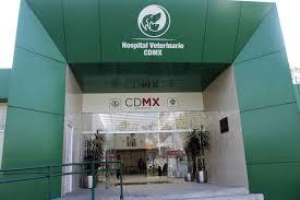 consulta de saldo visa vale social cdmx capital social