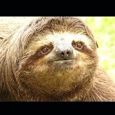 Sloth Meme Maker - sad sloth meme generator