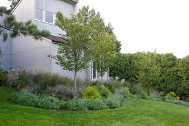 ornamental grass garden traditional garden new york by