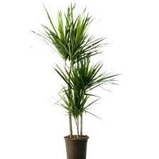 low light indoor trees indoor house plant garden design with indoor trees indoor plants
