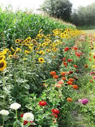 Fall Vegetable Garden Ideas by 1721 Best Gardening Images On Pinterest Gardening Garden Ideas
