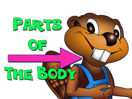 parts of the body english for kids youtube