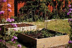 small scale crop rotation inspired vegetable gardening garden