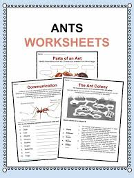 ant facts worksheets u0026 information for kids
