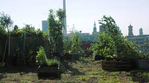 fruit and vegetable garden large city roof deck 2k stock