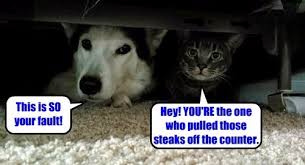 Funny Meme Dog - lolcats dogs lol at funny cat memes funny cat pictures with