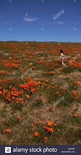 Japanese Language Of Flowers - japanese language of flowers stock photos u0026 japanese language of