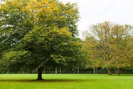 a large tree stands in a beautiful park stock photo