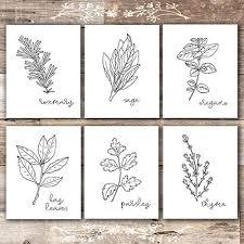 black and white prints for kitchen kitchen herbs black white prints botanical prints set of 6 8x10s