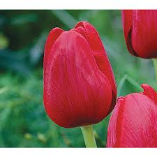 shop plant bulbs at lowes