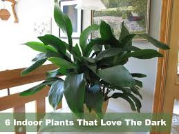 Low Light Indoor Flowers Best Indoor Flowering Plants For Low Light Low Lights Indoor