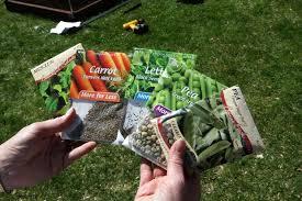 best starting vegetable garden how to start a vegetable garden mnn