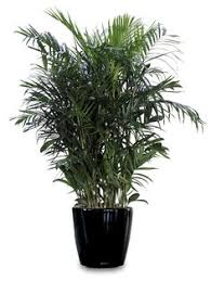 Low Light Indoor Trees 12 Best Houseplants For Improving The Air Quality In Your Home