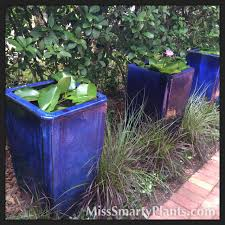 the private gardens of lake eola heights miss smarty plants