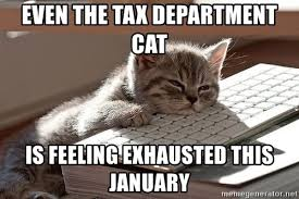 Sleepy Cat Meme - even the tax department cat is feeling exhausted this january