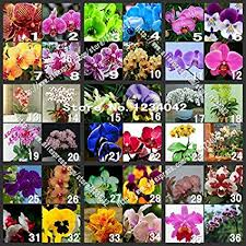 orchid plants for sale sale 200pc butterfly orchid seeds 36 varieties of
