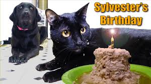 Talking Cat Meme - talking kitty cat 35 sylvester s birthday 2014 youtube