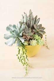 tips for planting succulents in containers succulents and sunshine
