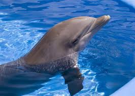 miraculous dolphin healing powers may help humans