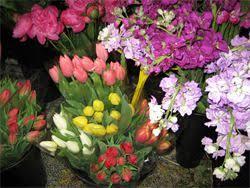 Bulk Flowers The Flower Market At Bayshore Bulk Flowers Tampa Fl