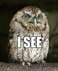Owl Memes - 20 hilariously adorable owl memes awesome pinterest owl memes