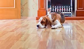 best flooring for dogs safety health according to scientific