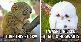 Meme Animals - 25 animals who turned out to be hilarious meme material