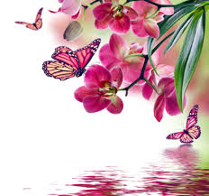 orchid pink water reflection flowers beautiful butterflies orchid