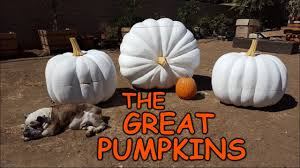 carving giant pumpkins sculpting foam props u0026 decorations youtube