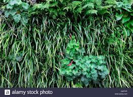 bergenia liriope heuchera dryopteris living green wall vertical