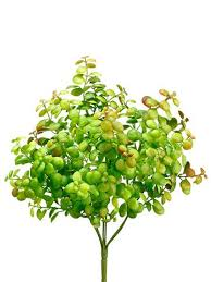 Discount Flowers Discount Silk Flowers Cheap Flowers Wholesale Florist Afloral