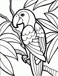 coloring pages free printable parrot coloring pages kids