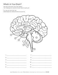 ask a biologist human brain coloring page
