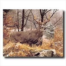 amazon whitetail buck deer doe snow animal wildlife
