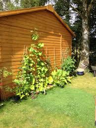 garden layout ideas design a woodland garden shade ideas types of gardens ninebark
